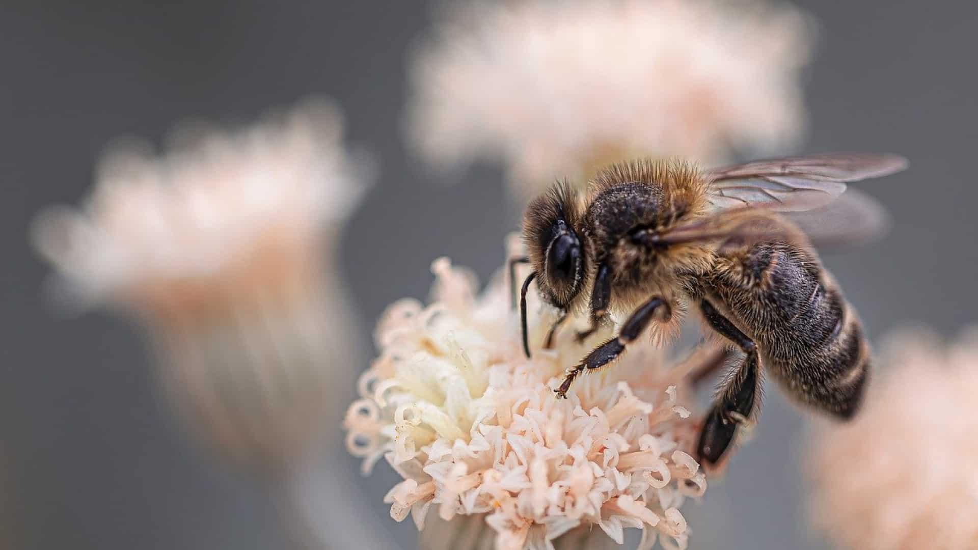 Quelle est l'utilité des abeilles ?